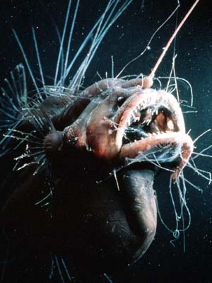 Bizzarre Deep Sea Angler Fish